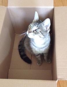 Leela in a box